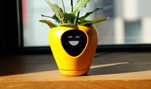 Face Plant: Lüa Smart Planter Is Your Botanical Buddy