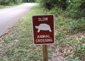 Eclectic Avenue: 10 Weird Animal Crossing Signs