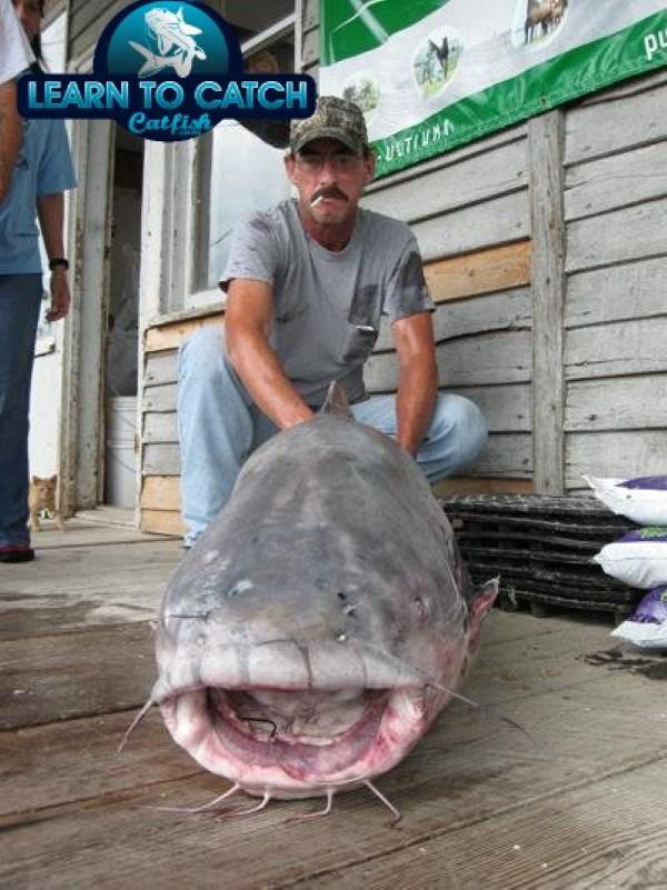 Taste Invaders: Blue Catfish Make Menus Greener
