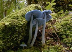 Shrooms With a View: 10 Strange & Beautiful Mushrooms