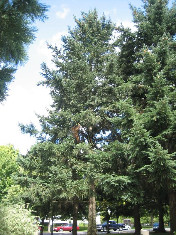 Bark Trek: Amazing Moon Trees Wood Be Good