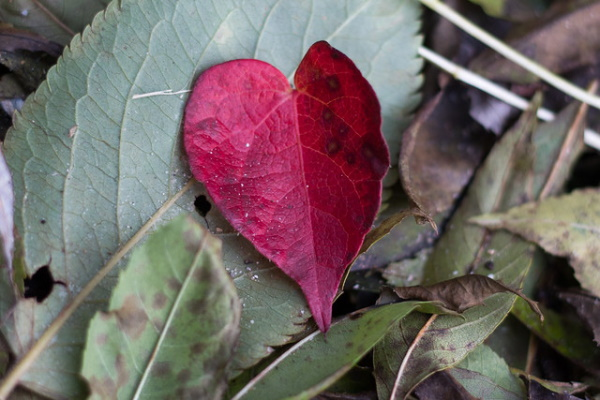 Something All Fall: 7 Amazing Offbeat Autumn Leaves
