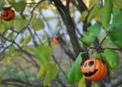 Orange Shade: 10 Totally Top-Heavy Pumpkin Trees